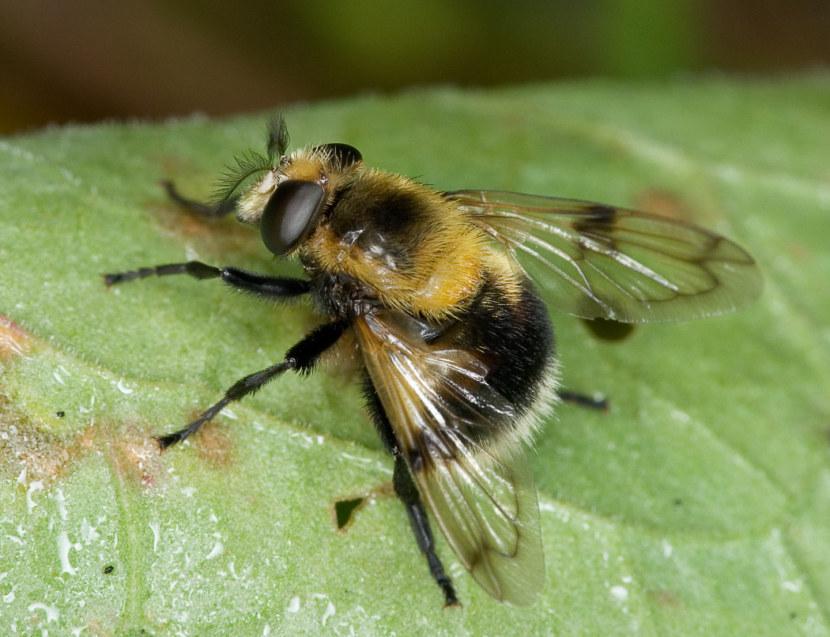 Картинки пчелы жучки мухи кружатся над, открытки днем